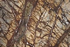 brown-rainforest