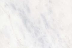 white-pigon